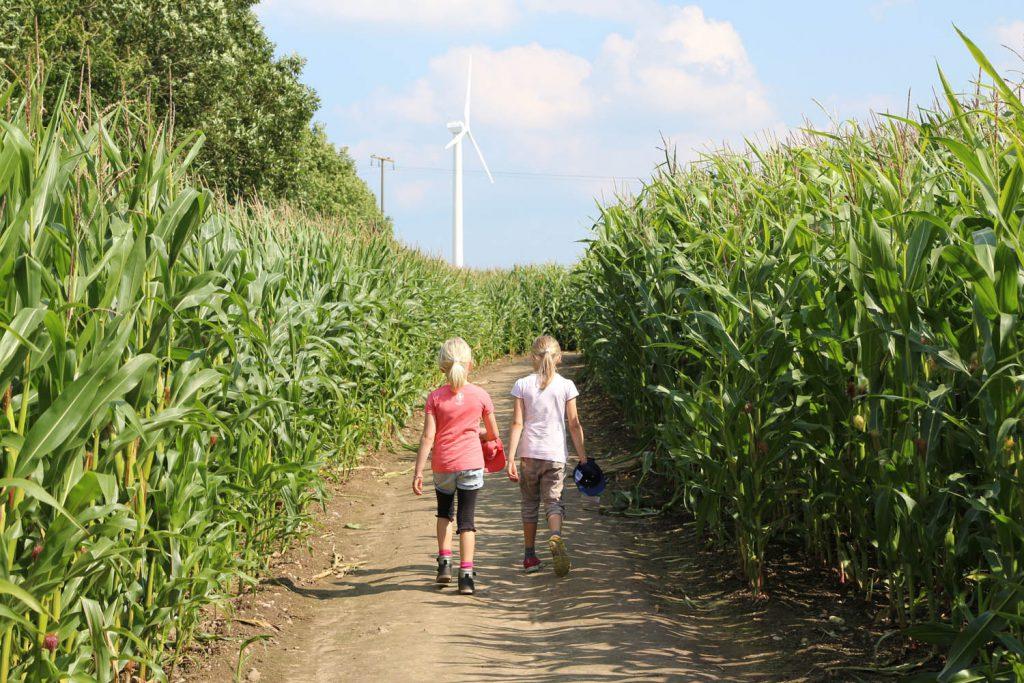 die Umgebung vom Landhaus Scholz -WMaislabyrinth